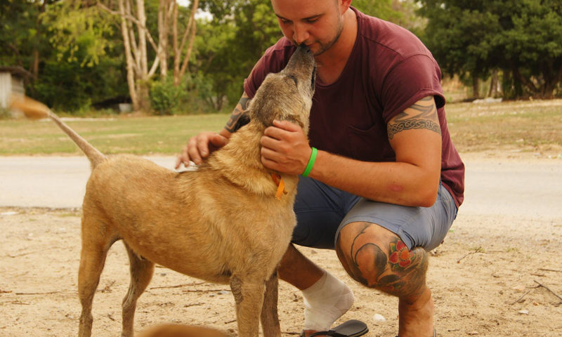 volunteer with stray dogs
