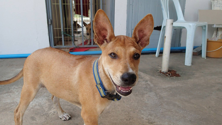 dogs-at-the-volunteer-project-in-thailand