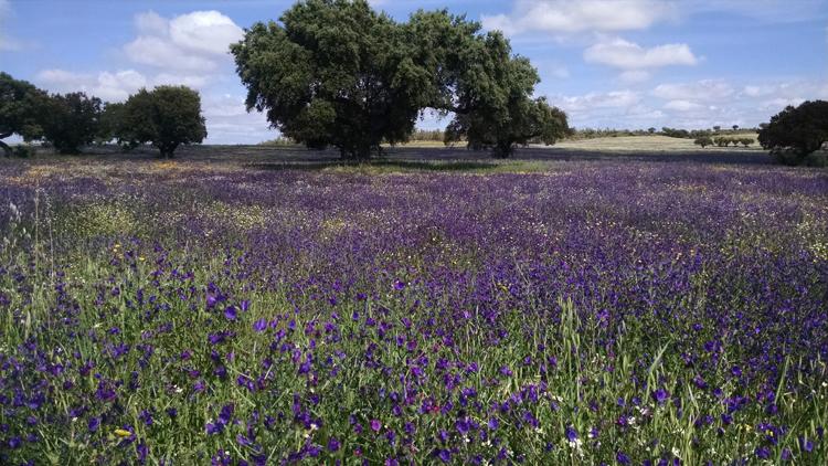 field-of-flowers-in-spain