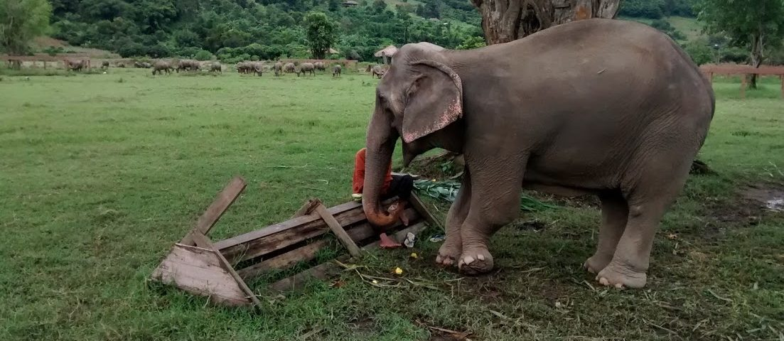 Falling in Love is Awfully Easy–A Day at Elephant Nature Park
