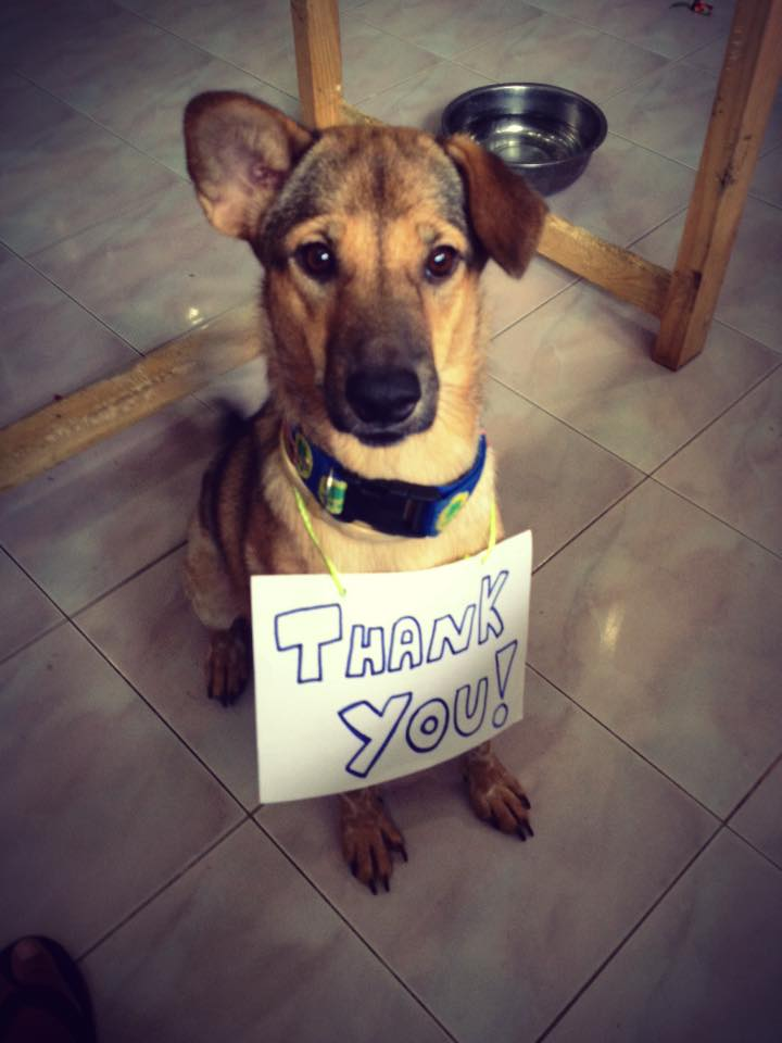 puppy with thank you sign