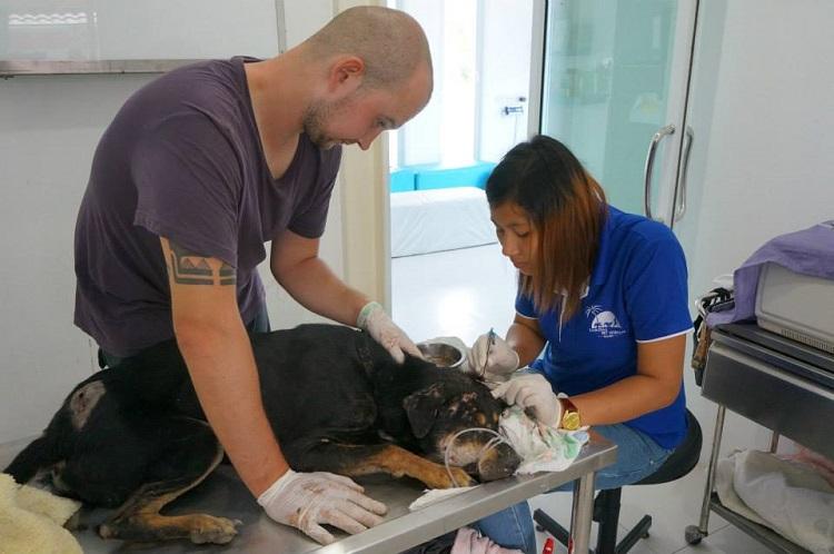 volunteer helps with surgery