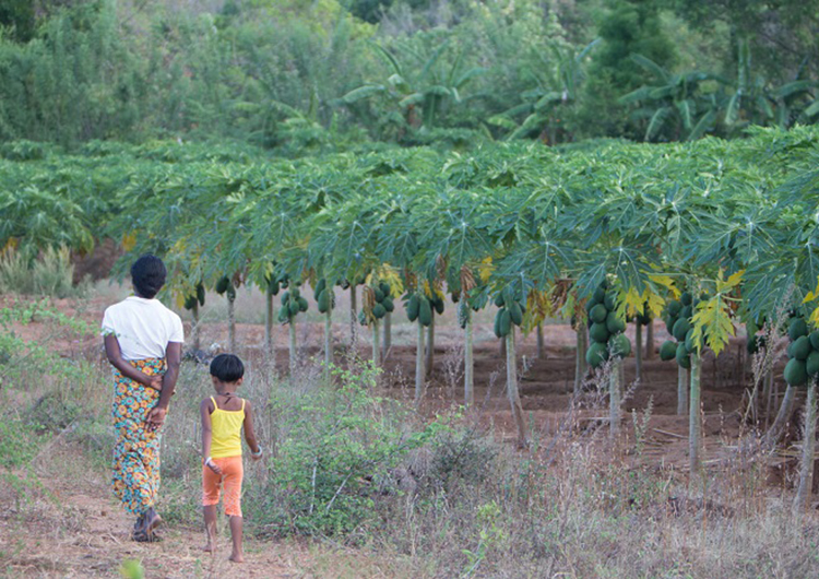 walking-near-papaya-trees