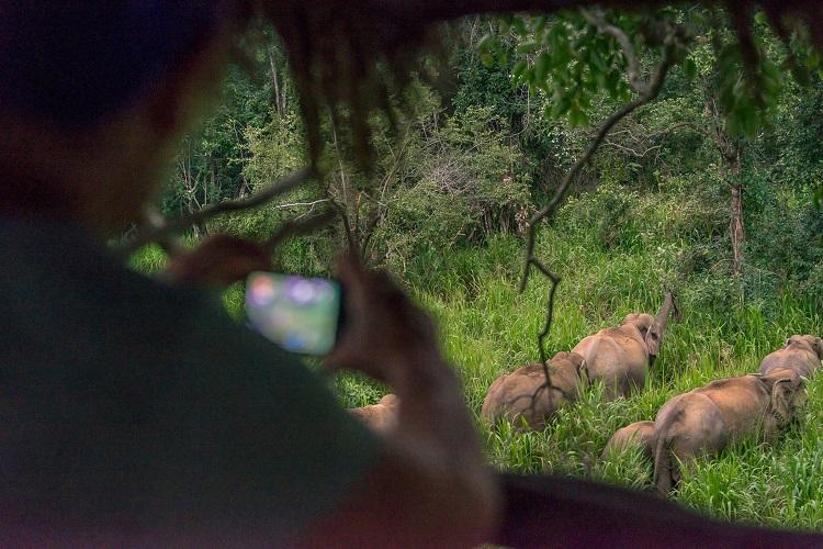 monitoring sri lankan elephants