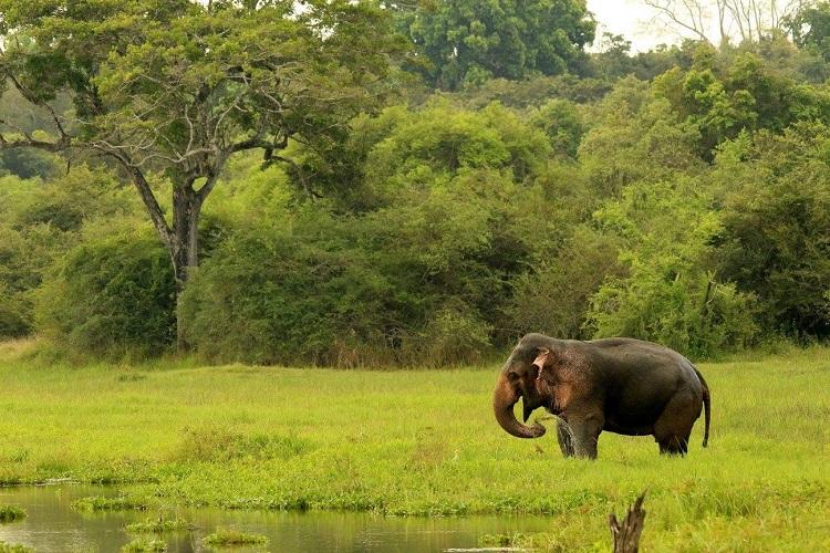 single elephant bathing