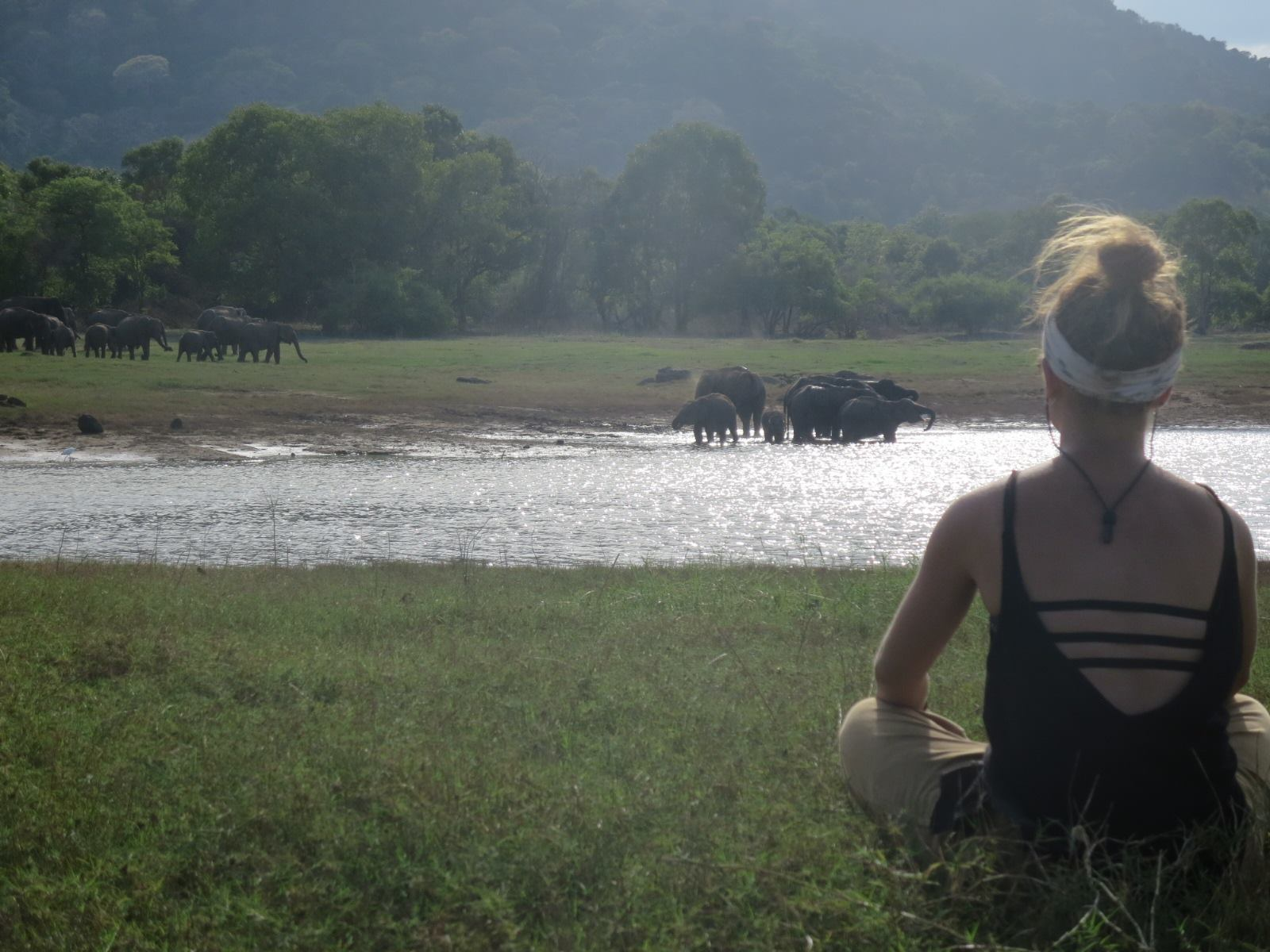 view with elephants from back
