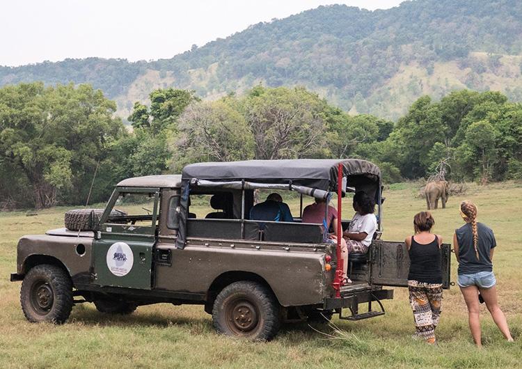 Volunteers looking at elephants in Sri Lanka.