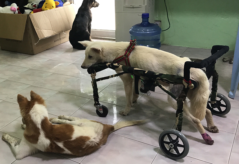 Healing dogs at a clinic in Thailand.