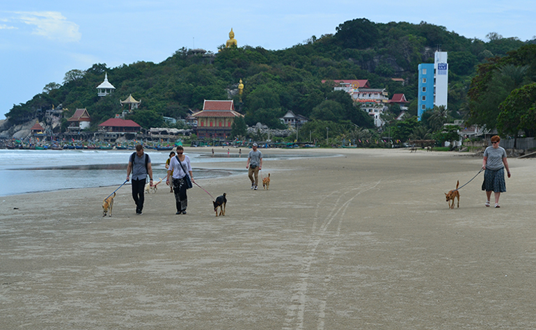 Walking dogs on a beach in Thailand.