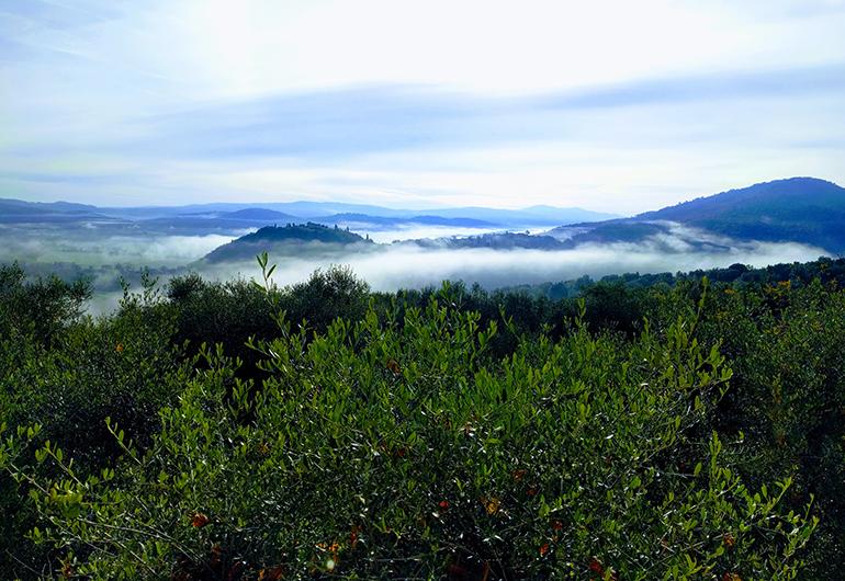 Mountain fog in rural Tuscany at dawn.
